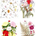 보태니컬 가든 인 스크래치 북 : 마음에 위안을 주는 꽃과 시 12 – 펜 하나로 꽃을 피우다