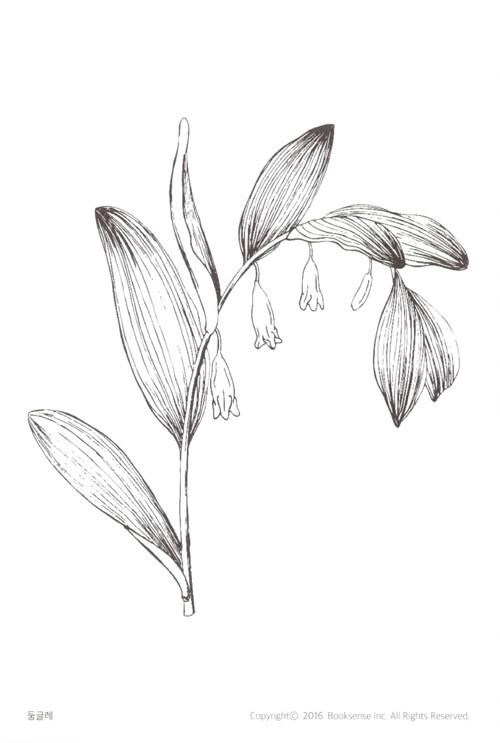 우리 숲의 꽃과 식물 컬러링 엽서북 : 풀꽃 – 색칠하며 배우는 우리 풀꽃 17종