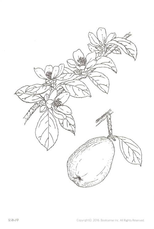 우리 숲의 꽃과 식물 컬러링 엽서북 : 나무꽃 – 색칠하며 배우는 우리 나무꽃 17종